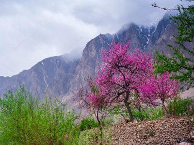 hunza blossom tour